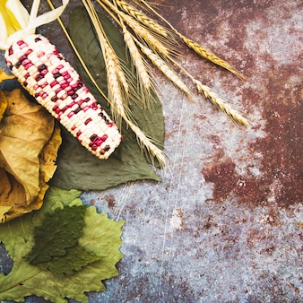 Corn lying on leaves