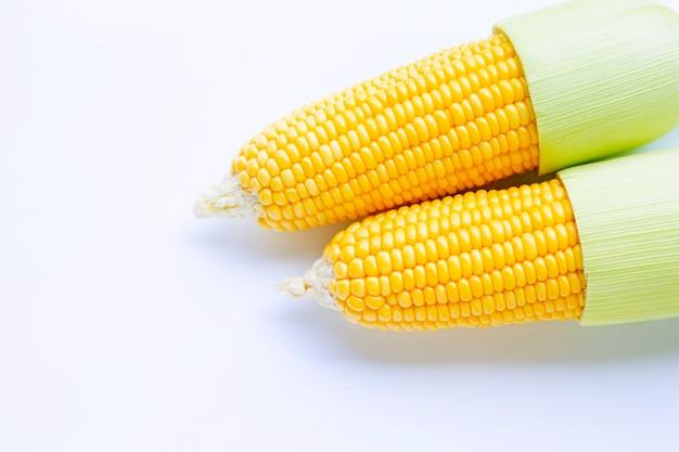白のトウモロコシ