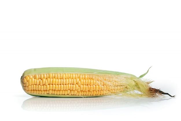 白い背景の上のトウモロコシ