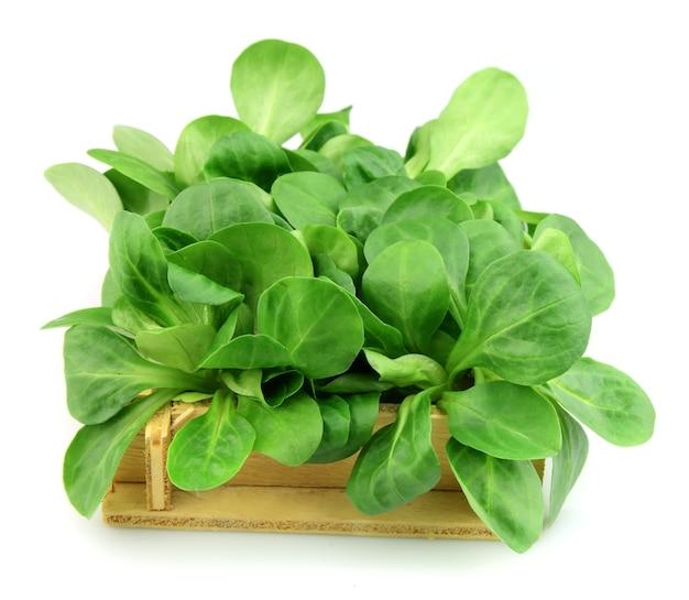 Кукурузный салат крупным планом на белом