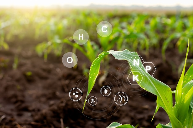 Corn seedlings grow from fertile ground and have technology icons about minerals in the soil suitable for crops.