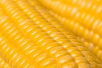 Corn texture background, fresh organic corn