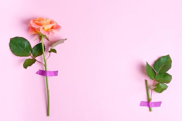 신선한 장미 꽃과 밝은 분홍색 배경에 테이프로 attaced 녹색 잎에서 모서리 테두리.
