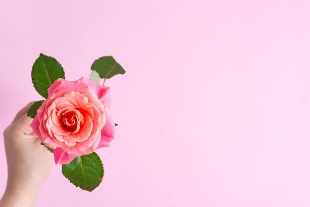 Угловая праздничная рамка из свежих цветущих роз цветов на розовом фоне