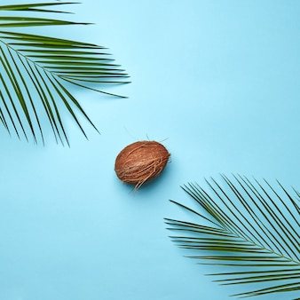 Corner frame of the leaves of a palm tree and a whole coconut on a blue background with copy space. creative food composition. flat lay