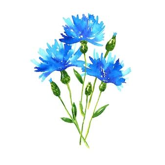 수레 국화 꽃다발. 푸른 아름다운 꽃. 손으로 그린 수채화 그림. 외딴.