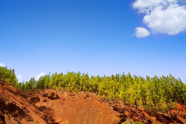 Corona forestal в национальном парке тейде на тенерифе