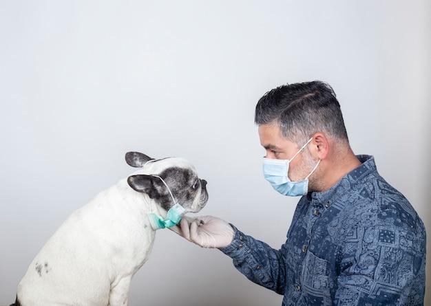 코로나 바이러스. 보호 수술 용 마스크와 라텍스 장갑 남자. covid-19 코로나 바이러스 질병은 애완 동물에게 위험합니다. 프랑스 불독 개