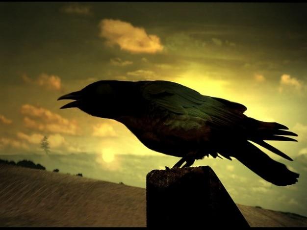 Corvus cormorant corone rocks wings raven birds