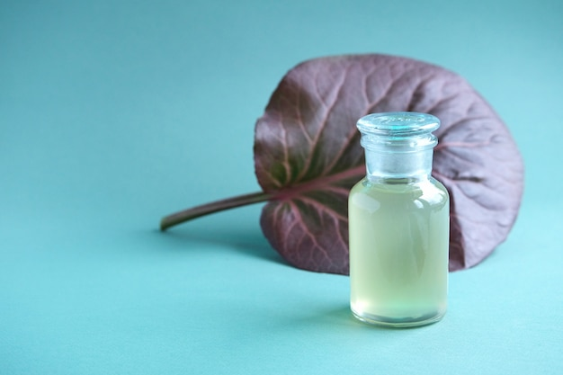 Cosmetic glass bottle mock-up and large maroon leaf of badan (bergenia crassifolia) behind it on trendy  turquoise background. natural body care oil, shampoo, soap.