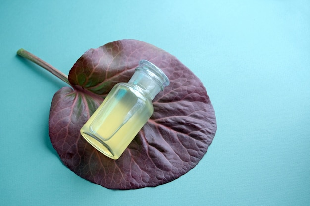 Cosmetic glass bottle mock-up lying on large maroon leaf of bergenia crassifolia on mint color background. natural body care oil, shampoo, soap.