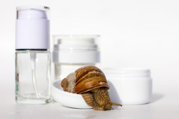 달팽이와 화장품 항아리