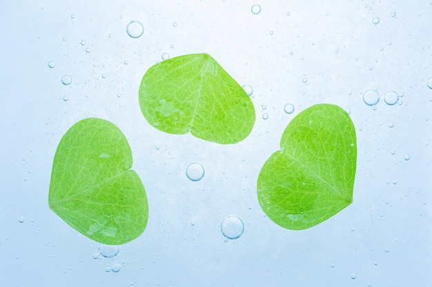 Cosmetic translucent gel on top are fresh green leaf.
