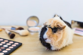 Cosmetics products and guinea on wooden desk