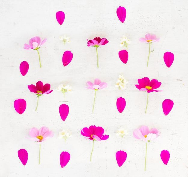 コスモスとジャスミンの花と花びらの白いテーブルの上にお祝いのフラットレイ構成