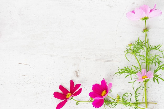 Cosmos flowers frame on white wooden table