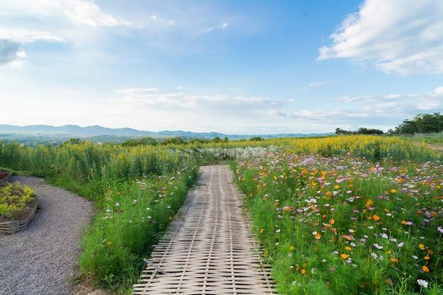 フラワーガーデンのコスモスの花と青い空の白い雲