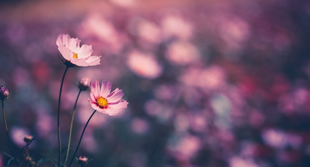 정원에서 코스모스 꽃