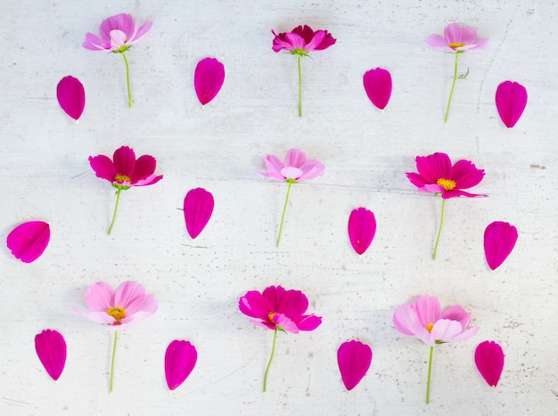 Космос розовые цветы и лепестки праздничный плоский узор на белом столе