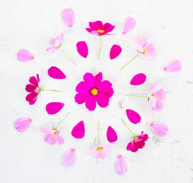 Праздничная композиция из розовых цветов космоса на белом столе