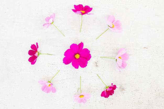 Космос розовые цветы праздничная плоская композиция на белом столе