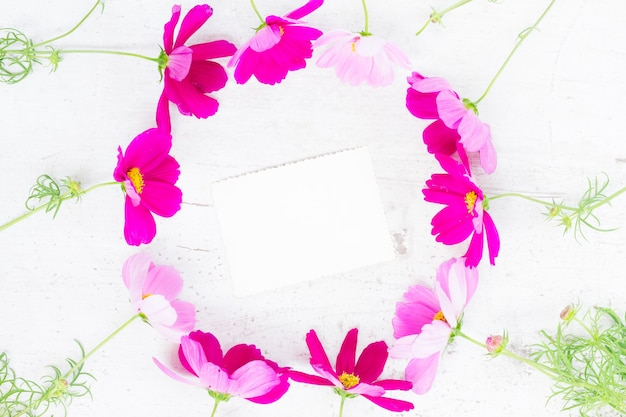 Cosmos pink flowers festive frame composition on white table