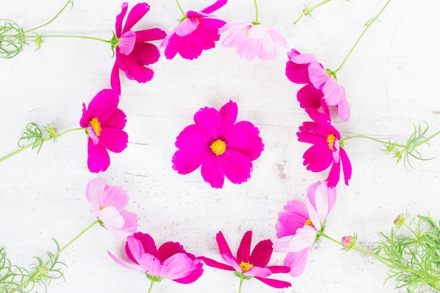 Cosmos pink fresh flowers festive frame composition on white table
