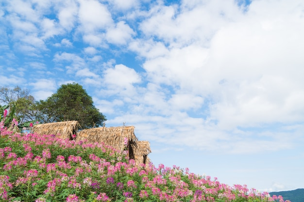 Cottage and flower field.