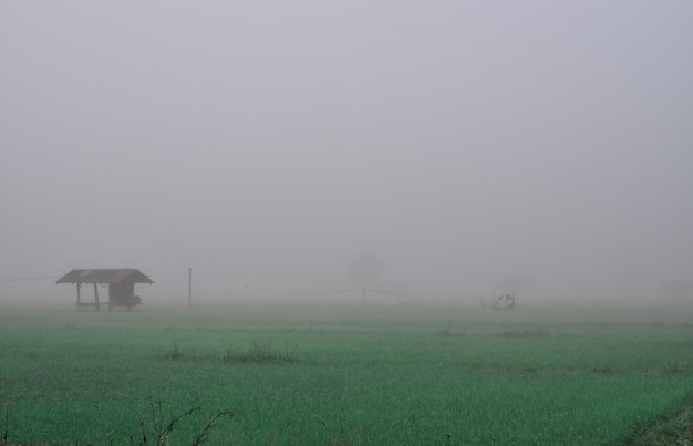Cottage in the rice field and fog in winter. chiang mai thailand