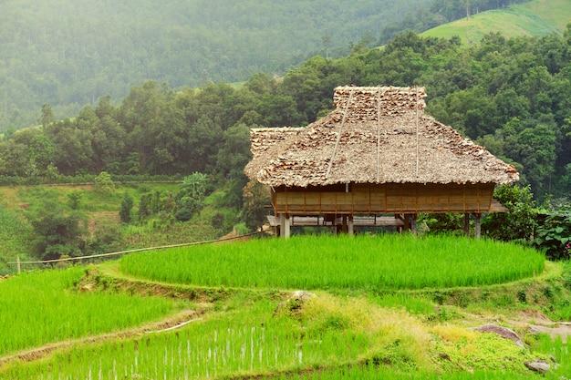Cottage in rice fields at asian, hut of asia style