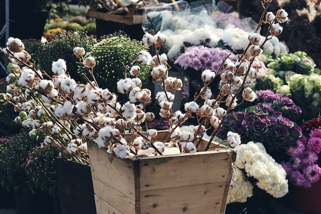 Cotton branch and bushes of chrysanthemums bloom in flower shop. autumn decorations.
