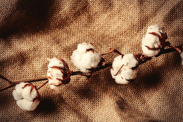 Cotton branch on jute background. above view
