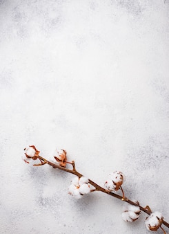 Cotton branch on light background