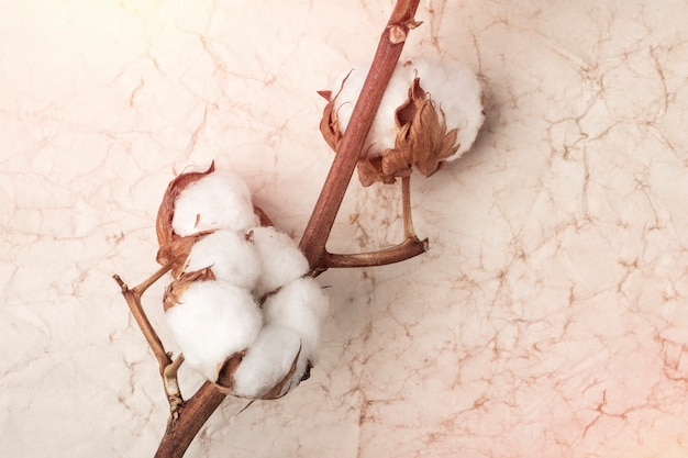 背景の古い紙に花の綿の枝。コピースペース