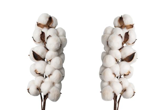 白い背景で隔離の綿の花の枝。上面図。