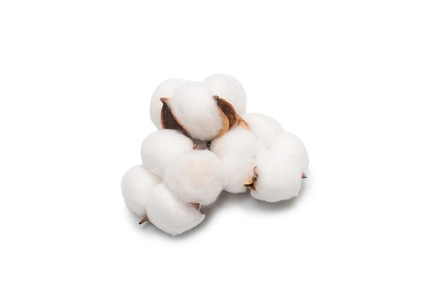 목화 꽃 분기 흰색 표면에 고립입니다. 평면도.