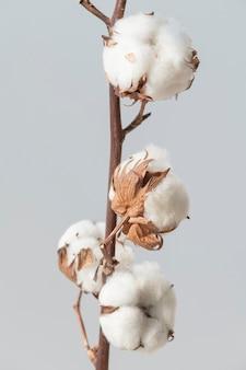 青い背景の綿の花の枝