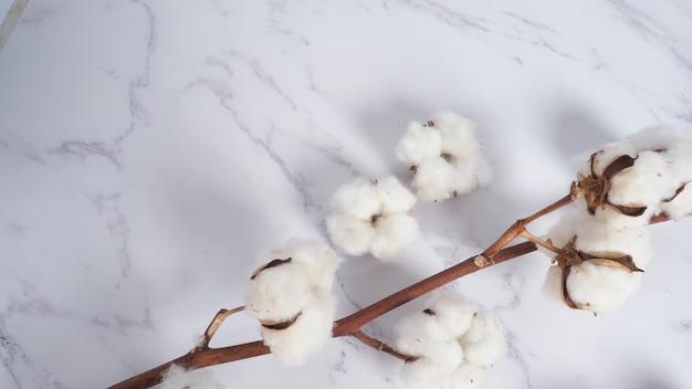 흰색 대리석 배경 상단 보기의 목화 꽃 가지 스튜디오에서 최소 레이아웃 높은 각도 샷