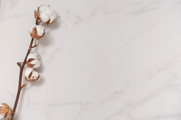 Cotton flower branch on white marble from above