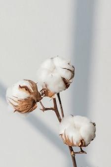 ブラインド付きの綿の花の枝