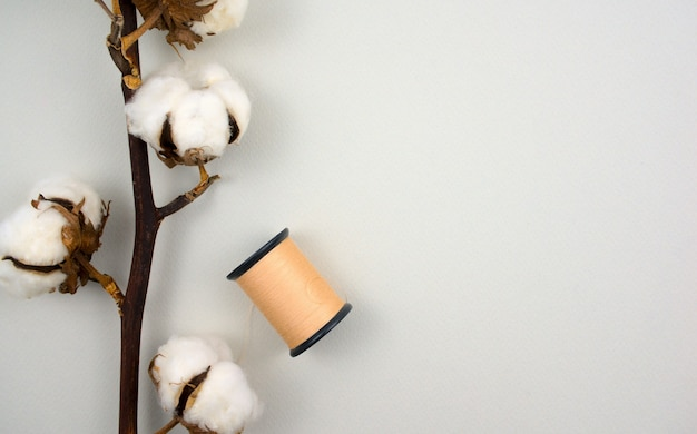 Cotton flower branch with spool of brown thread on white color background