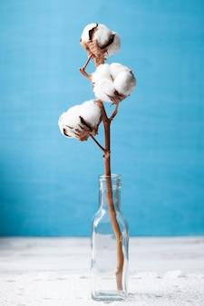 綿の花は青い背景にクローズアップ