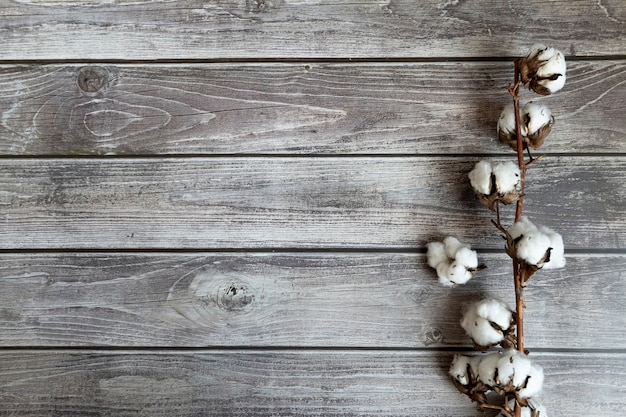 Cotton flower on wooden background