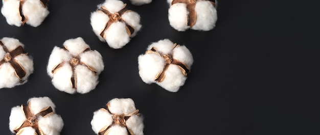 Cotton flowers isolated on black background studio shot flat lay top view angle white cotton flowe