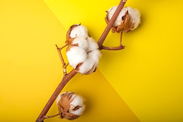 柔らかい黄色とオレンジ色の紙の背景に綿の花。コピースペース