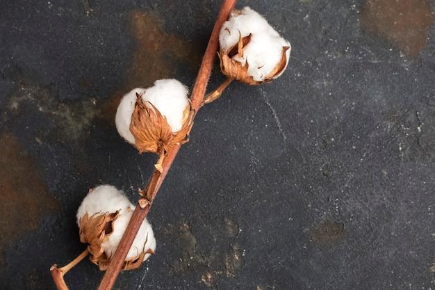色付きの背景に綿の花。閉じる。コピースペース