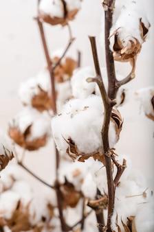 白い背景の上の綿の花。ミニマリズム、背景、ソフトフォーカス。