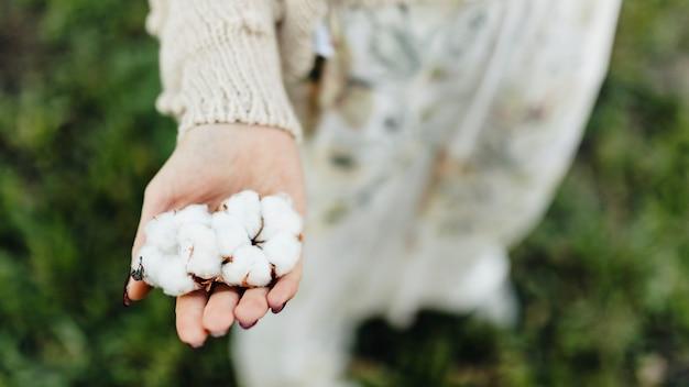 여자의 손에 면화 꽃 프리미엄 사진