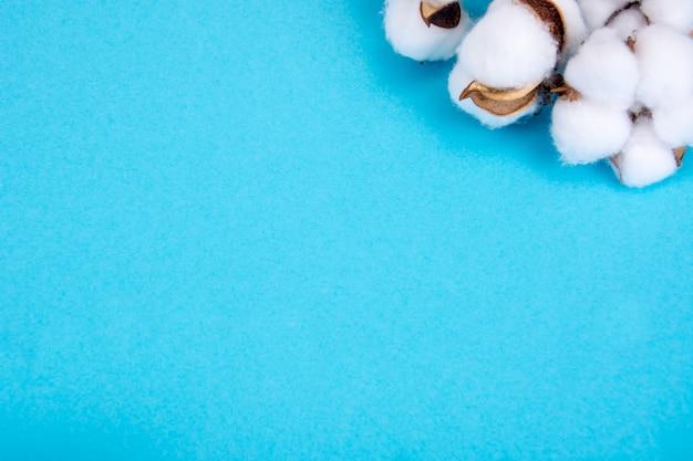 Цветы хлопка на синей поверхности