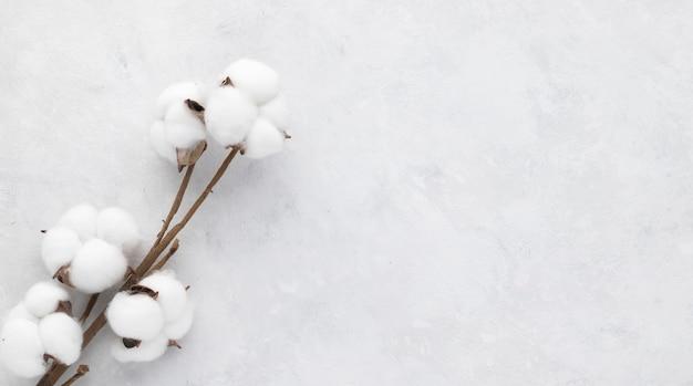 白いグランジの背景に綿の花。フラットレイ、トップビュー、ミニマリズム